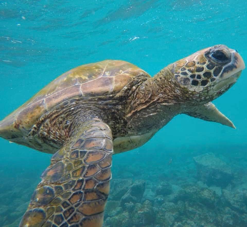 Tartaruga delle Isole Galapagos