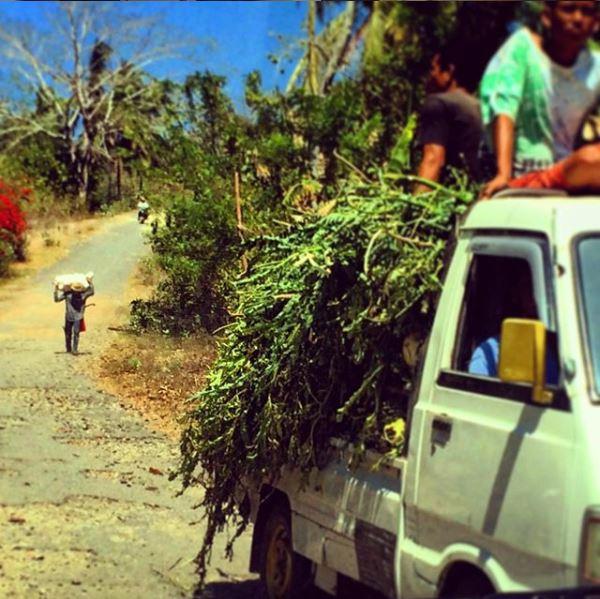 Isola di Lombok, lavoro presso le piantagioni