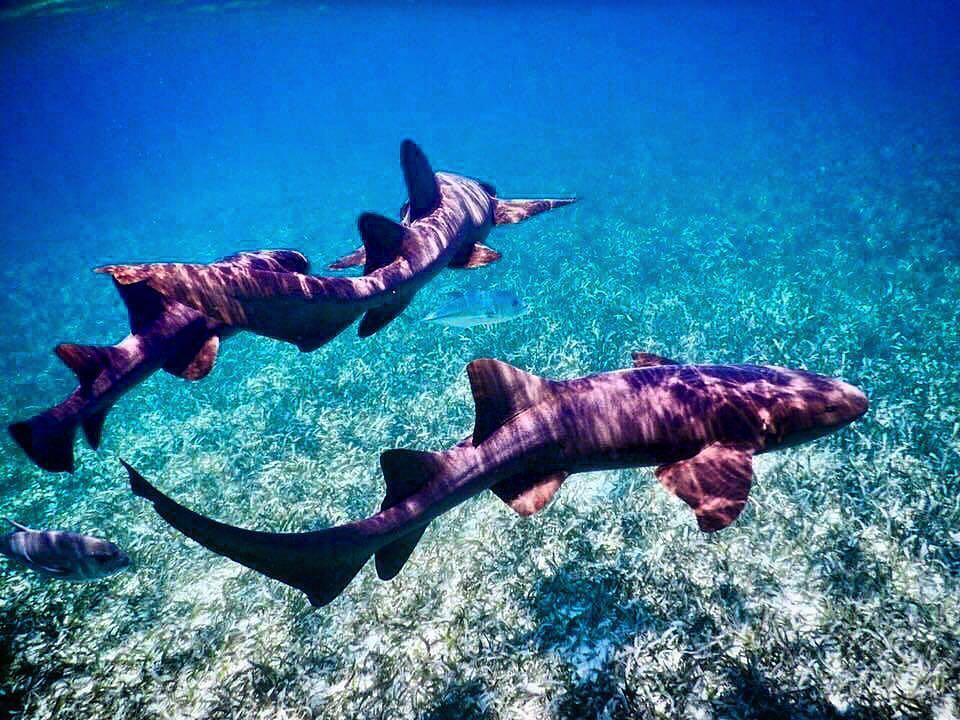 Escursione alla Shark Ray Alley