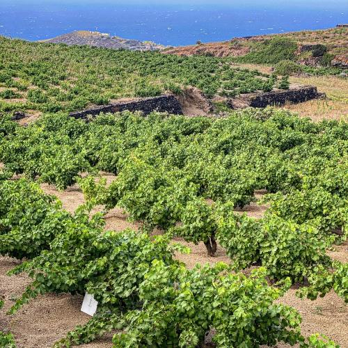 Azienda vinicola di Salvatore Murana