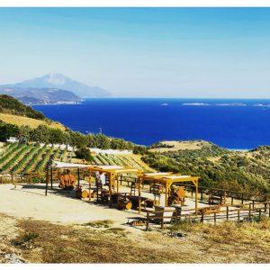 Vini e cantine della Grecia Continentale